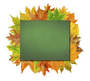 Empty board with colorful leaves isolated on white Stock Photography