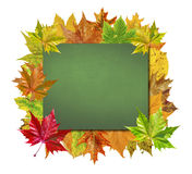 Empty board with colorful leaves isolated on white Stock Photos