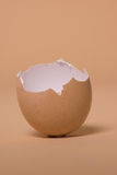 Empty broken brown egg shell Royalty Free Stock Photos