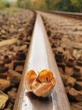 Empty broken snail shell on old rusty railway rail Stock Photos