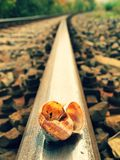 Empty and broken snail shell on old rusty railway rail Royalty Free Stock Photos