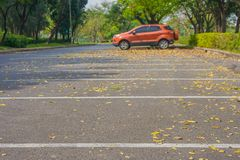 Empty car parking lot and yellow flowers fall on the concrete floor in public park surrounded with green trees and bush. royalty free stock photos