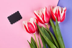 Empty card and coloured tulips. Royalty Free Stock Photo
