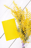 Empty card and mimosa flowers Stock Images