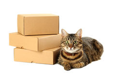 Empty cardboard boxes Royalty Free Stock Image
