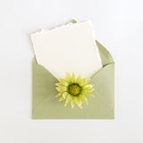 Empty cardboard card with flower and an envelope Royalty Free Stock Photo