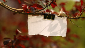 Empty cardboard in nature. Torn white blank piece of paper hanged on tree branch ideal for easy writing messages Royalty Free Stock Photography