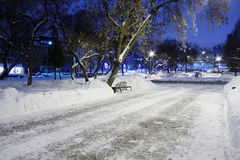 Empty causeway, trees, bench in park at winter Royalty Free Stock Image