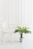 Empty chair with vase plant Royalty Free Stock Photos