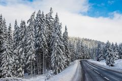 Empty clean asphalt road at wintertime, big snow on the pine woods. Blue sky with white clouds stock photos