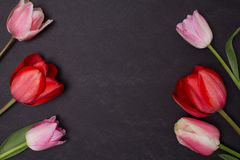 Empty clean black chalkboard with pink and red tulips. royalty free stock photography