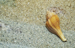Empty conchshell. A empty conchshell marine animal on sand background Stock Photos