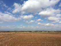 Empty cotton flower field. In Greece stock photography