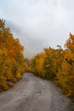 Empty country road in autumnal fores. T in Crimean mountains Royalty Free Stock Images