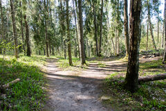 Empty country road in forest Royalty Free Stock Image