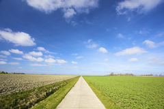 An empty country road through green meadows Royalty Free Stock Photography