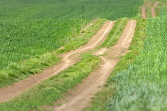 Empty country road through the wheat fields Stock Photos