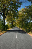 Empty countryside road. With autumn trees Royalty Free Stock Images