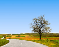Empty countryside road. With lonely tree and clear blue sky Royalty Free Stock Photography