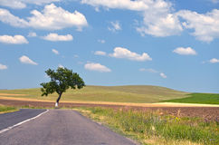 Empty countryside road. Among trees and fields at summer day Stock Photo