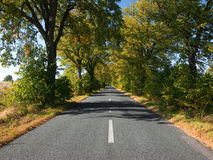 Empty countryside road with autumn trees. View of empty countryside road with autumn trees Royalty Free Stock Photography