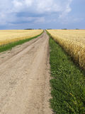 Empty countryside road through fields with wheat. Ukraine, Europ Stock Images