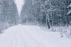 Empty countryside road after snowstorm Royalty Free Stock Photo