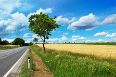 Empty countryside road before thunderstorm. Empty countryside road among trees and fields at summer day before thunderstorm Royalty Free Stock Photography