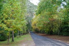Empty countryside road with trees in autumn. Nature background Stock Photography