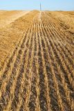 Empty cropped field royalty free stock photography