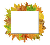 Empty Cube board with colorful leaves isolated on white Stock Images