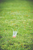 Empty cup from drinks with straws Royalty Free Stock Photos