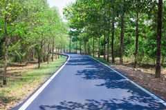 Empty curved road between the trees along the way.  Stock Photography