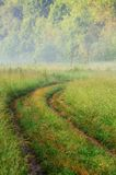 Empty curved rural road in green grass with morning mist Royalty Free Stock Photography