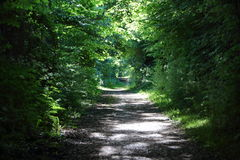 Empty Danish Forest Path in Summer Afternoon Stock Images