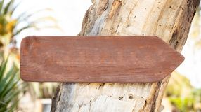 Empty directional wooden sign on a tree trunk, closeup view, space for text royalty free stock image