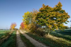 An empty dirt road in autumn time, South Moravia. A romantic picture of empty road in autumn time, South Moravia, Czech Republic Royalty Free Stock Photo