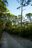 Empty dirt road in florida Stock Photography