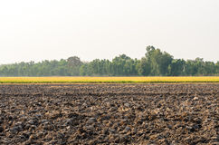 Empty dry barren ground , cornfield and green forest . Royalty Free Stock Photography