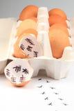 Empty egg shells Stock Photos