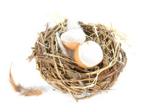 Empty egg shells in nest Stock Photos