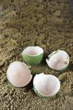 Empty Eggs. Empty Birds or Reptile Eggs on Sand Stock Photos