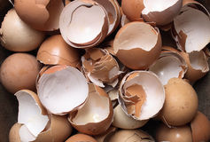 Empty eggs Royalty Free Stock Photos