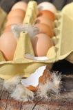 Empty eggshell Stock Photography