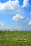 Empty field. A green meadow with dandelions. Impressive sky with clouds stock photos