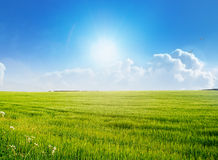 Empty field on a bright summer day Royalty Free Stock Image