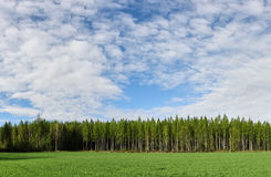Empty field with forest and lots of space in the summer Royalty Free Stock Photography