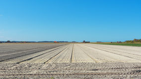 Empty field prepared for planting. Stock Image