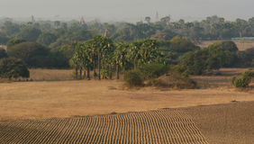 The empty fields with palm trees in Shan, Myanmar Stock Photos