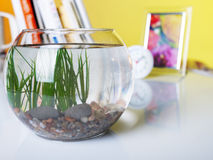 Empty fish tank on the table with books. In the morning - placeholder stock image